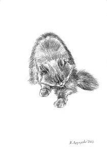 Художественный проект Один день из жизни кошки. Марина Ефремова. Кошка умывается. 2012. Бумага, уголь. 30х20